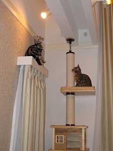 キャットタワーでどっちが高いところまでいけるか競争