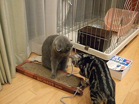 紐を取り合って遊ぶ姉妹