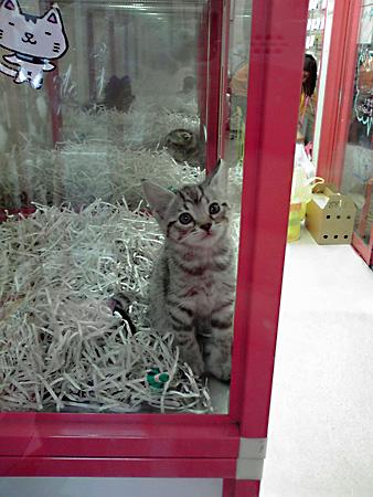 Pet_shop