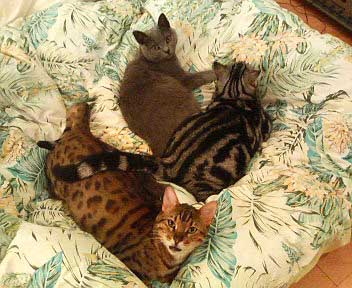 3cats_on_futon_1