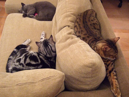 3cats_sleeping