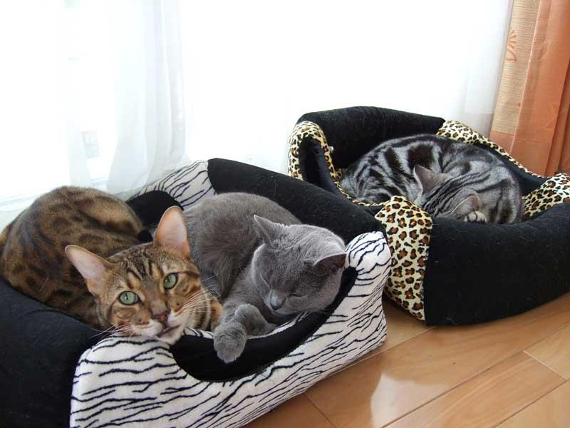 3catsinbed