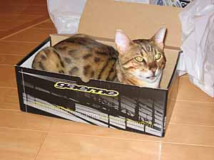 Catinthebox