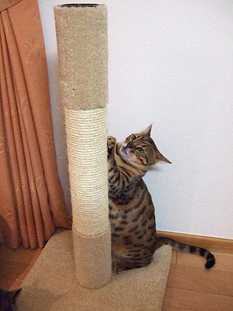 Kaede_tower2