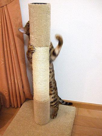 Kaede_tower3